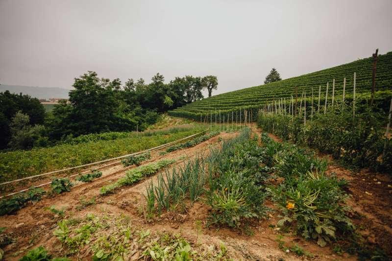 Orto privato del relais con produzione verdura a Km 0